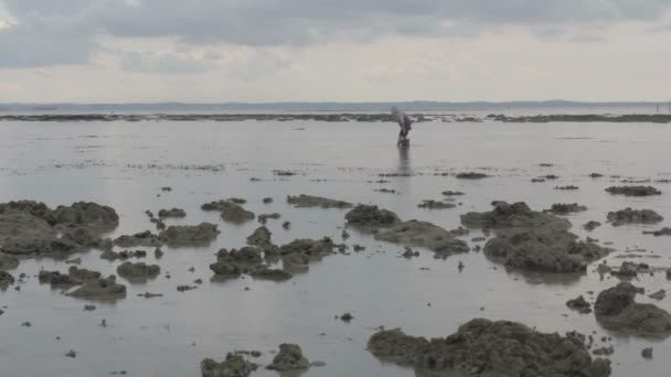 Austern sammeln bei Ebbe