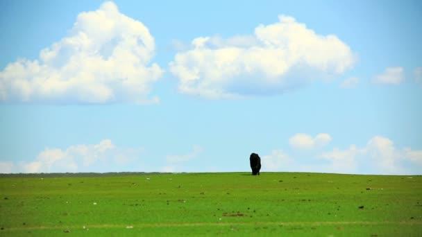 zvířata pasoucí se na louky a pastviny