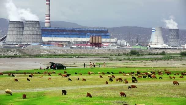 Animals grazing