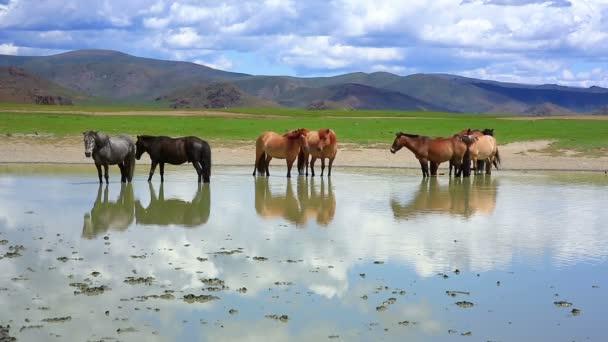 Mongolské koně v rozlehlé louky
