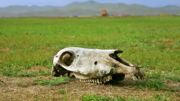 Skull on grass