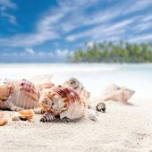mušlí na mořském písku