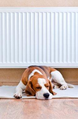 """Картина, постер, плакат, фотообои """"у собаки есть отдых близко к теплому радиатору"""", артикул 30104707"""