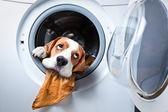 mosás után kutya