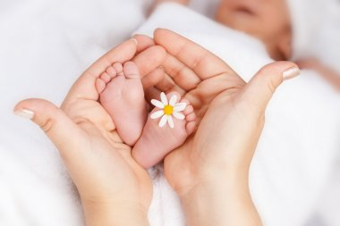 Lovely infant foot with little white daisy in mothers hands stock vector