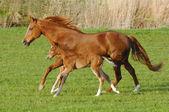 kůň a hříbě v tryskem