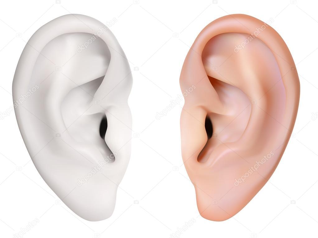 fotorealistische Vektor. menschliche Ohr. isoliert auf weiss ...