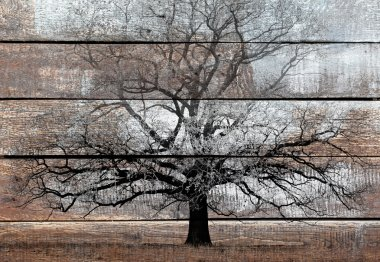 Old wood background with white painting and black tree