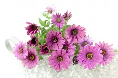 Pink flowers on white background stock vector