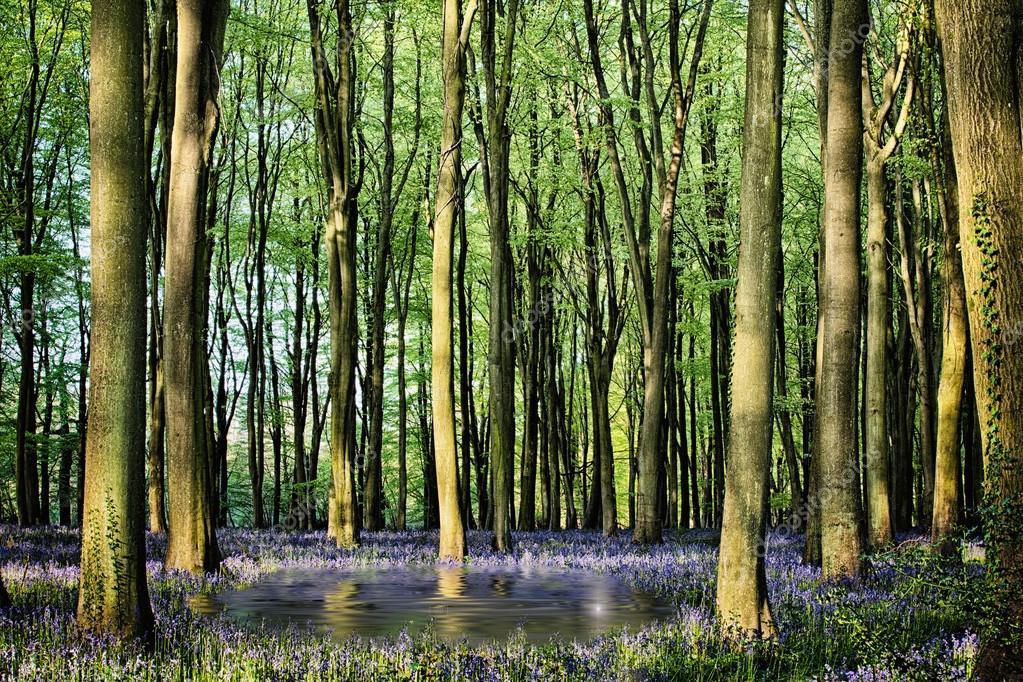 Secret pond in bluebell woods