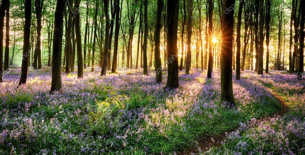 Фотообои Путь через блубелл лесу