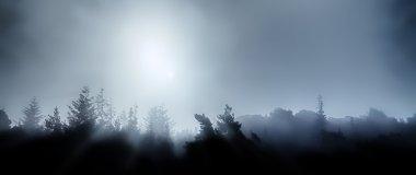 Midnight treetops in fog
