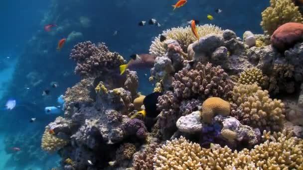 a korallzátonyok színes halak
