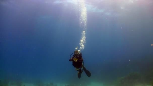Diver swims coral reefs