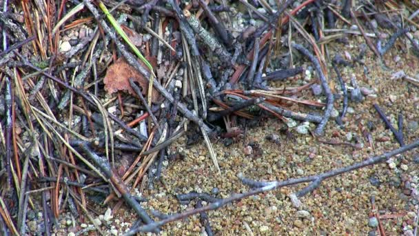 Ants and anthill