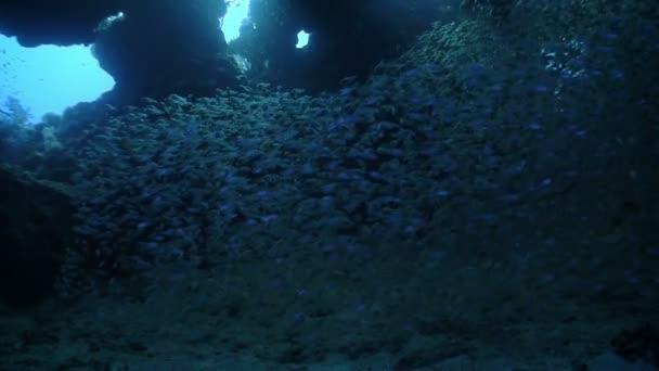 obrovské hejno ryb na korálovém útesu, Rudé moře