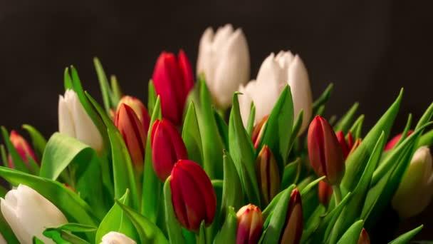 Kytice tulipánů světlé květy, timelapse