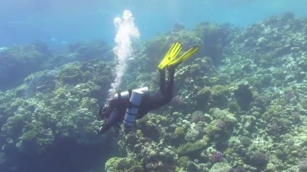 Diver make to dive