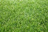 Fotografia campo verde