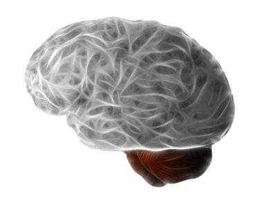 Brain and hypophysis