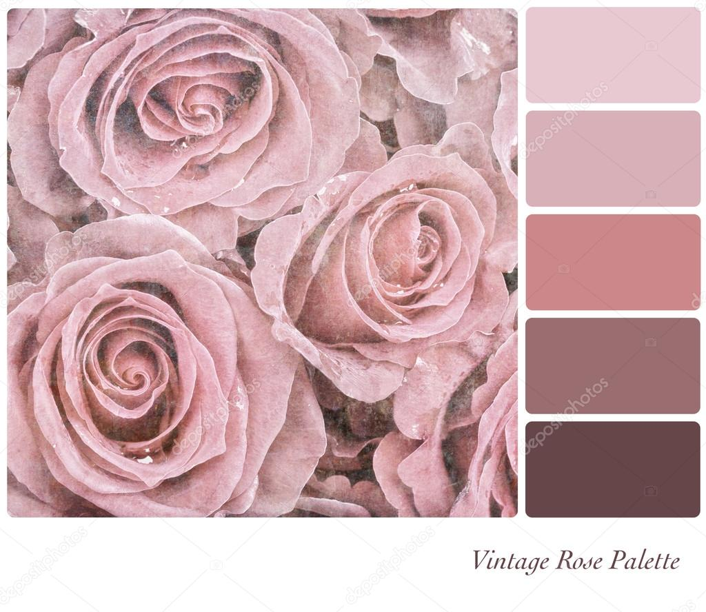 A Background Of Faded Pink Roses In Colour Palette With Complimetary Swatches Photo By Rixipix