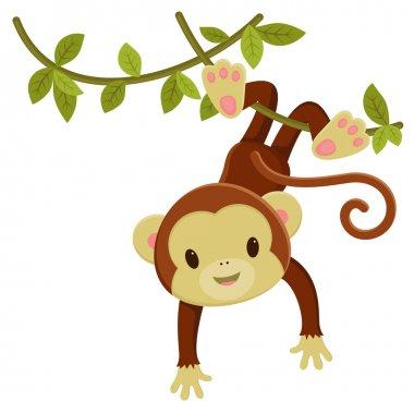 Cute cartoon monkey hanging on a liana. Vector clip art illustra
