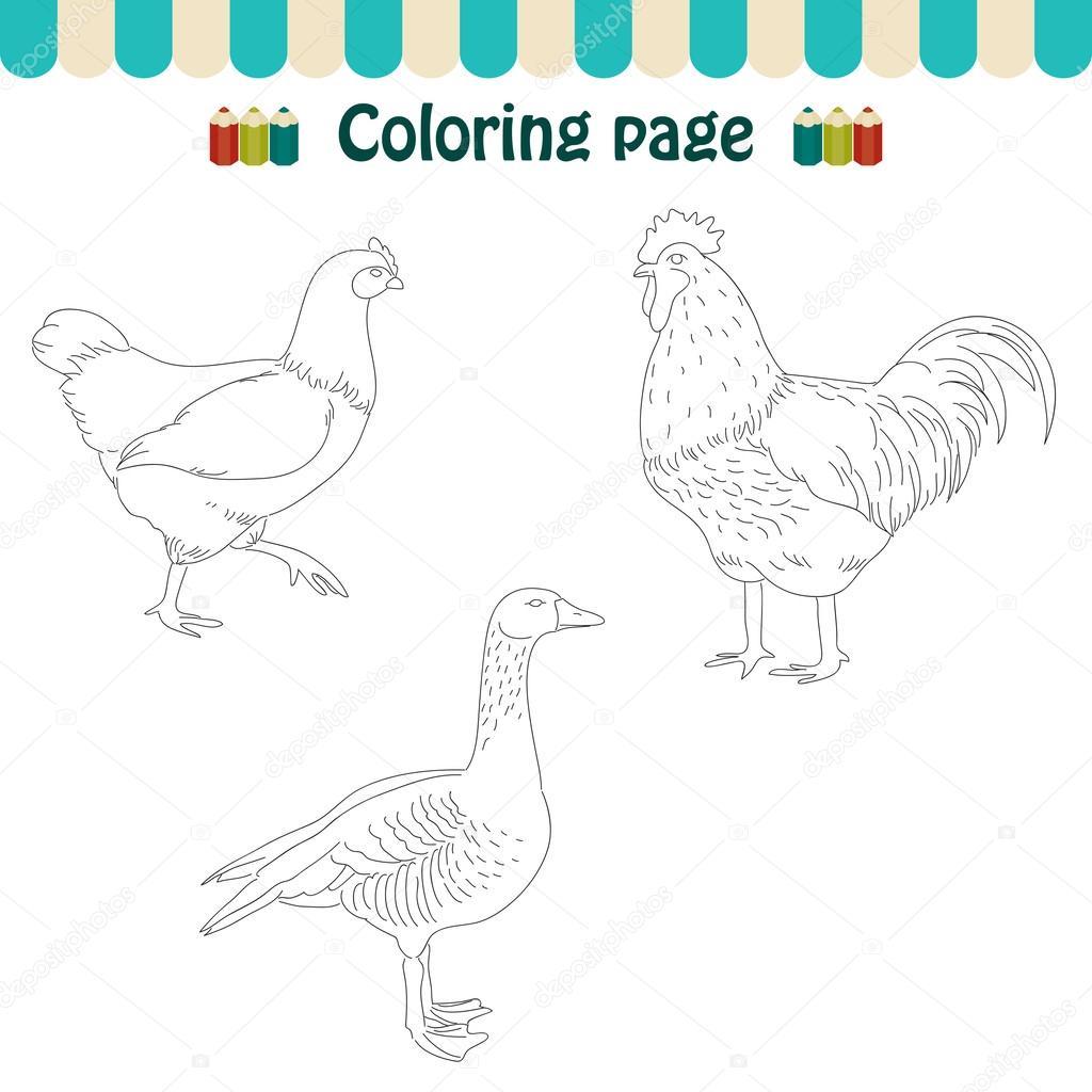 aves de granja de página para colorear — Archivo Imágenes ...