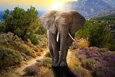 Elefánt sétál az úton