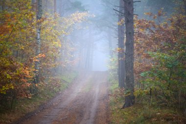 Misty forest in foggy weather