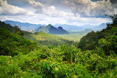 Rainforest of Khao Sok National Park
