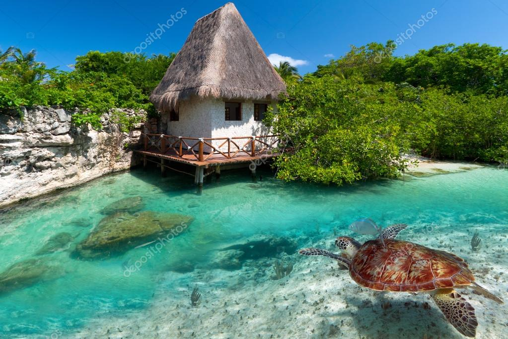 Mexican scenery with green turtle