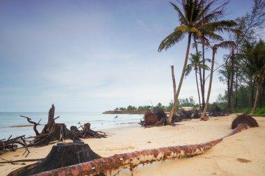 Devastated beach in Thailand