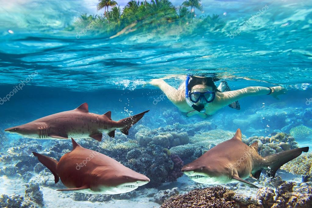 Snorkeling with dangerous bull sharks