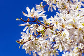 Photo White spring flowers on the tree