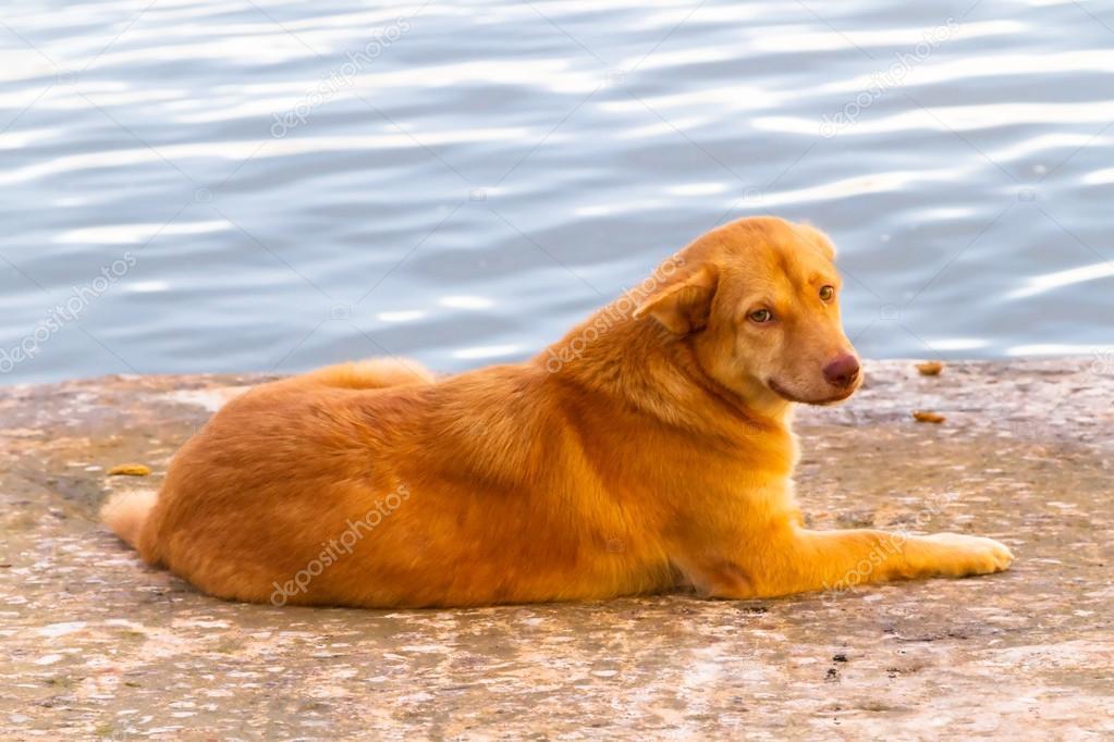 Homeless dog in the harbor of Koh Kho Khao
