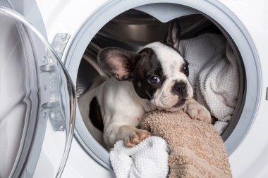 Puppy inside the washing machine