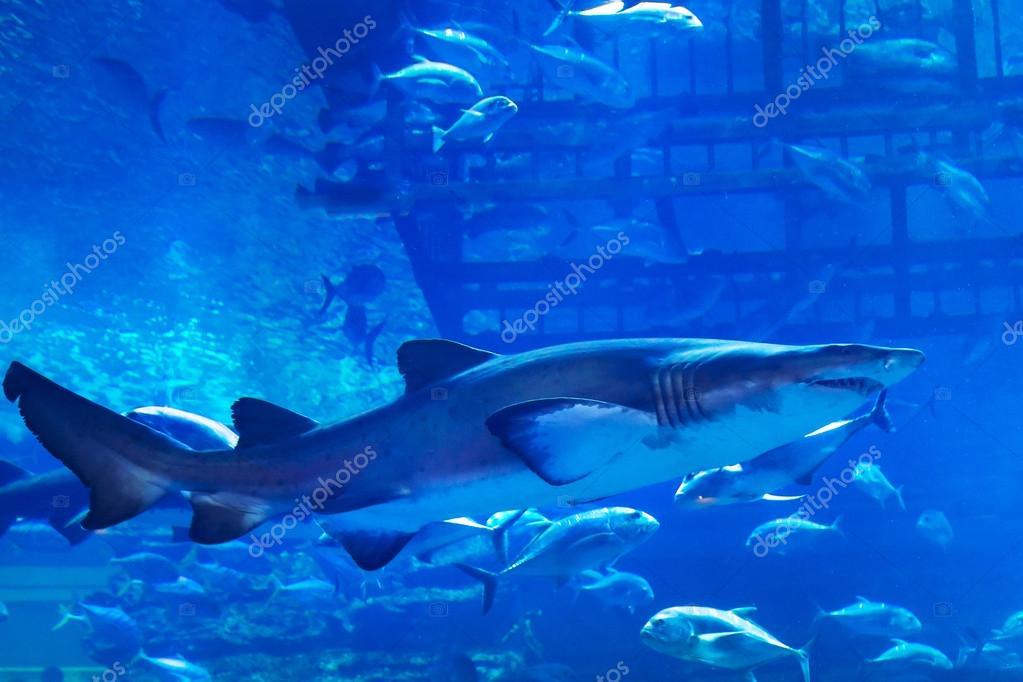 Huge natural aquarium
