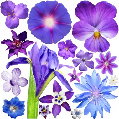 Big Set of Colorful Flowers Isolated on White Background