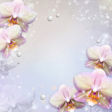orchids border