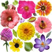 Nagy választéka elszigetelt fehér Background színes virágokat