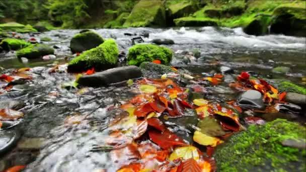 řeka kamenice na podzim, České Švýcarsko