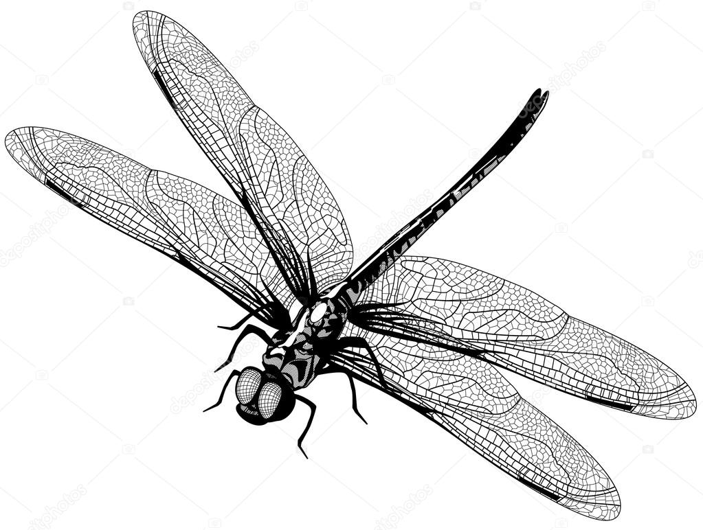 Depositphotos Stock Illustration Vector Dragonfly Photo Pencil Drawings