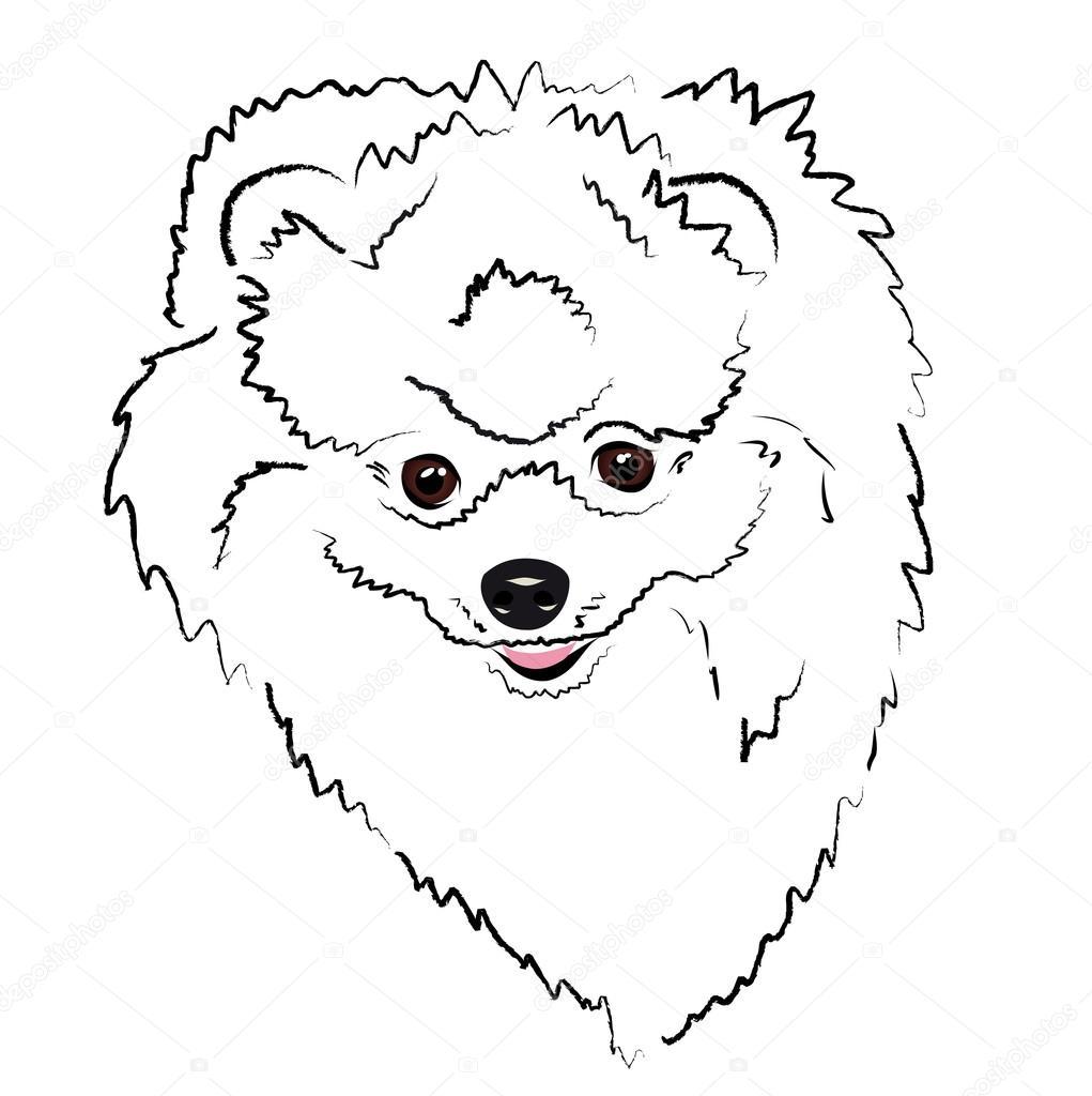 head Pomeranian