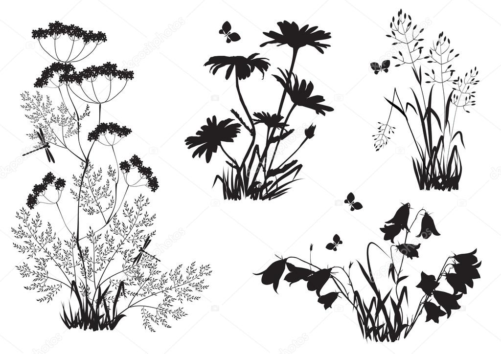 Silhouettes of flowers and herbs