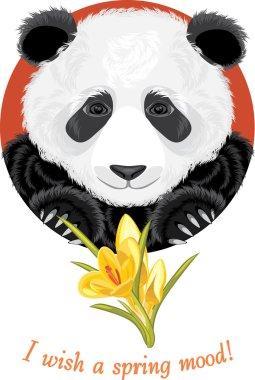 Panda with yellow crocuses