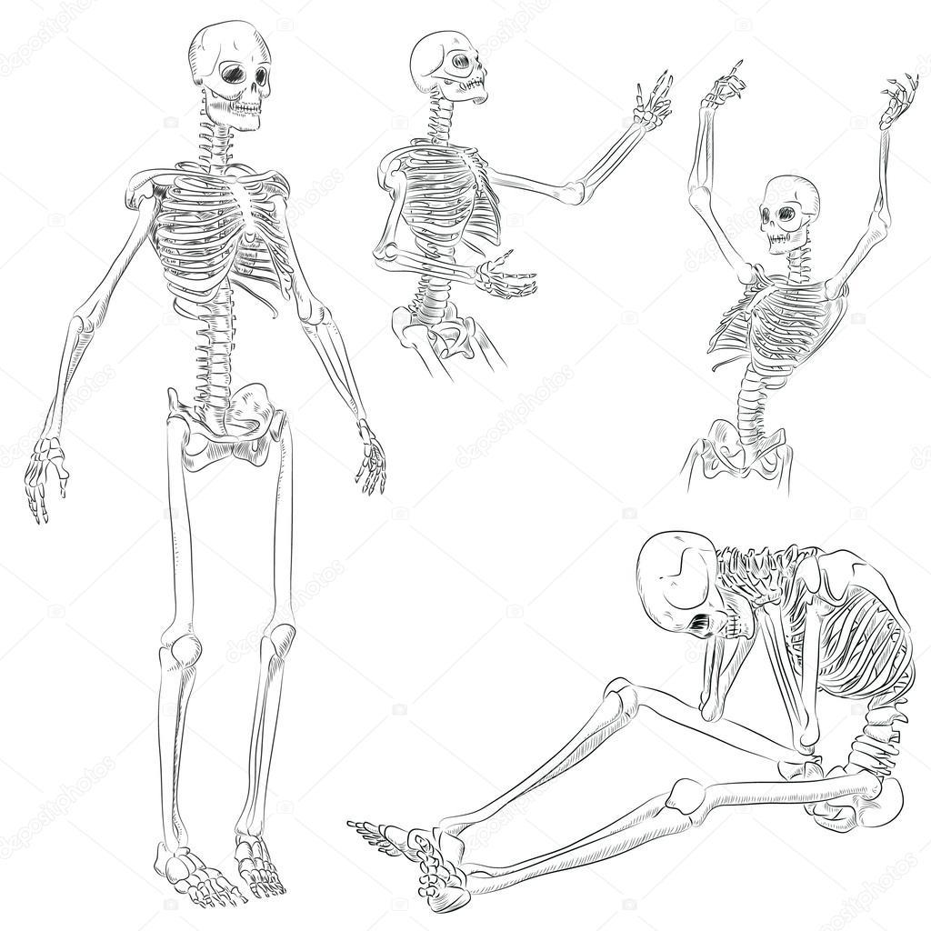 esqueleto humano — Vector de stock © Zhaconda #45446095