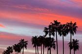 Fotografia sagome di albero di palma sullo sfondo del cielo al tramonto