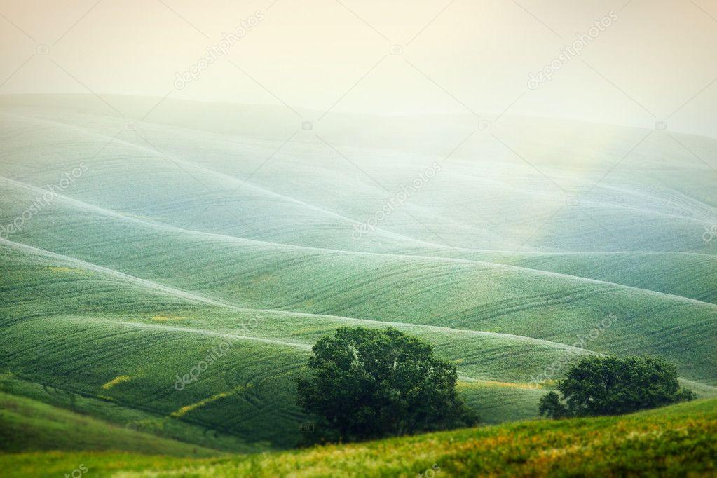 Фотообои The hills in the Italian Tuscany