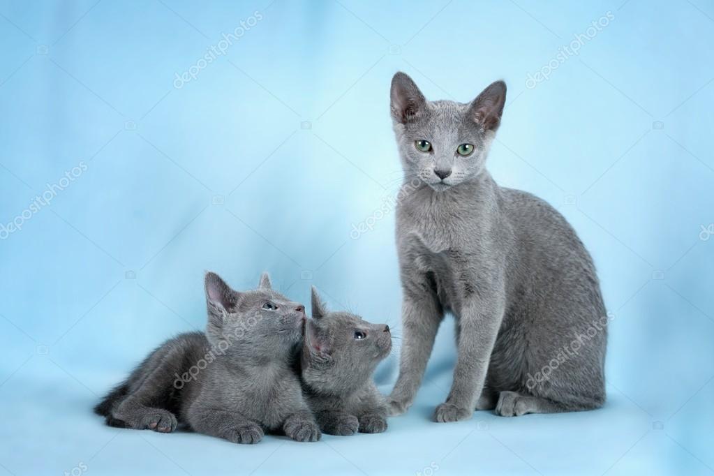 Belles chattes photos