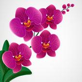 Fényképek virág rajzolatú háttér. orchidea virágok